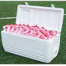 Where to find COOLER, 150 QUART in Toledo